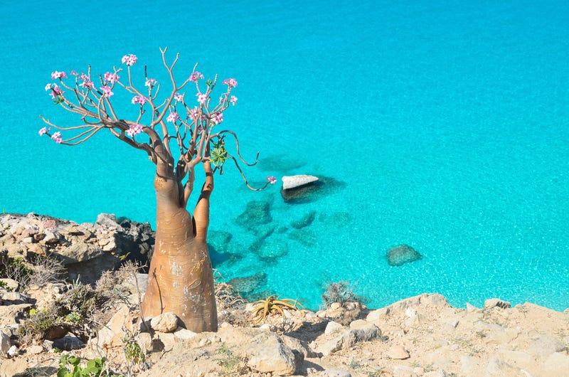 Así es Socotra, la isla de las especies perdidas (y muy, muy raras)