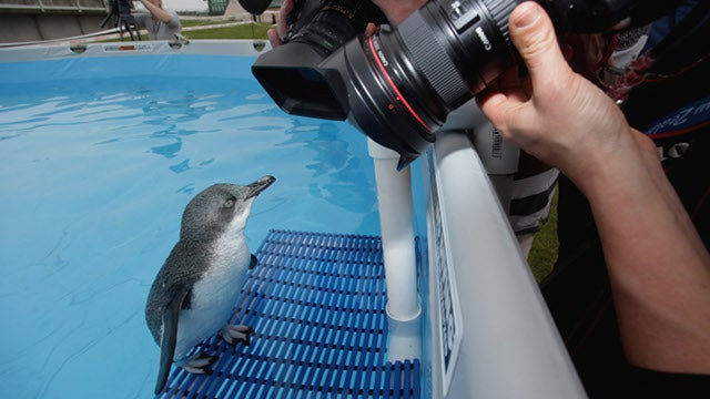This Rescued Penguin's Story Will Make Your Day