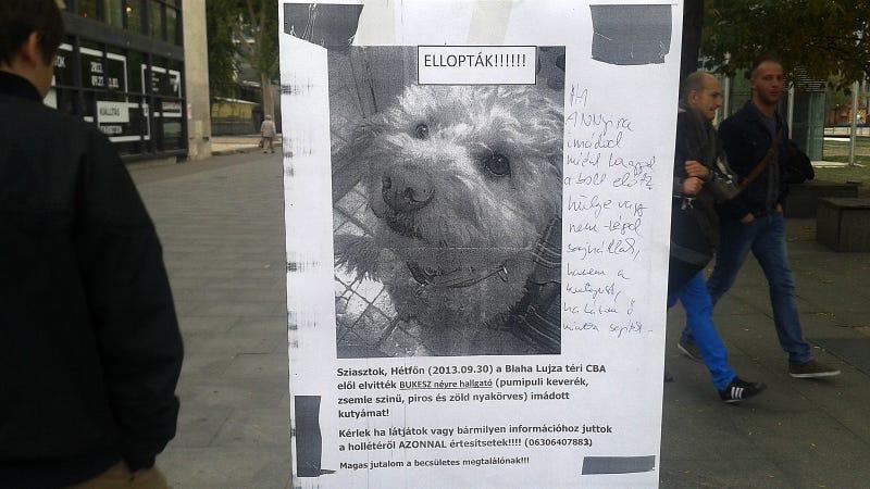 Ellopták a kutyádat? Mekkora hülye vagy!