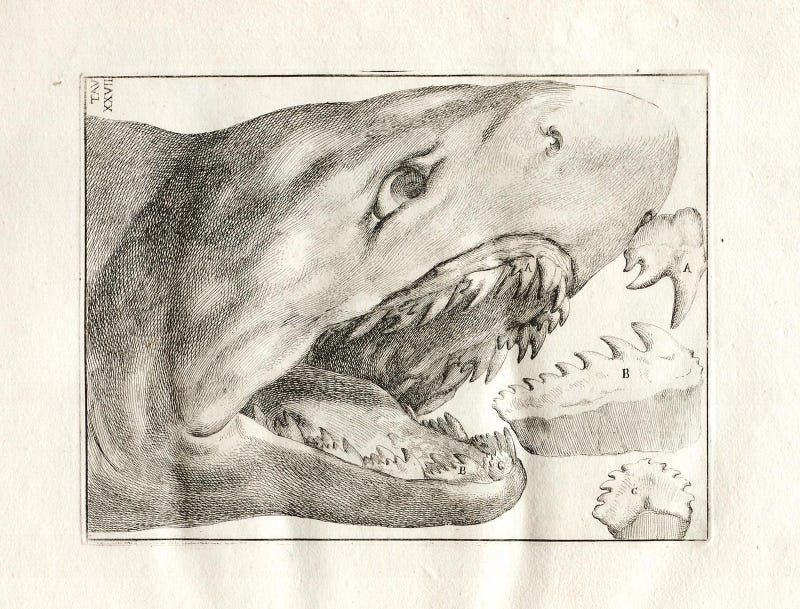 Vintage Shark Illustrations Are Jaw-Droppingly Gorgeous