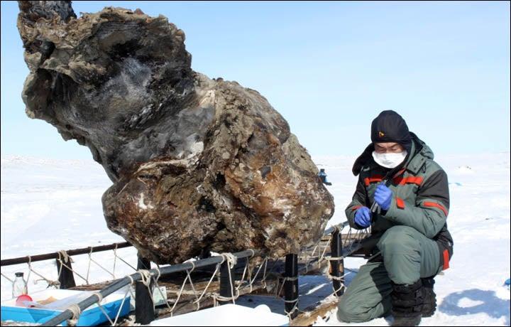 Encuentran un mamut sangrante en Siberia