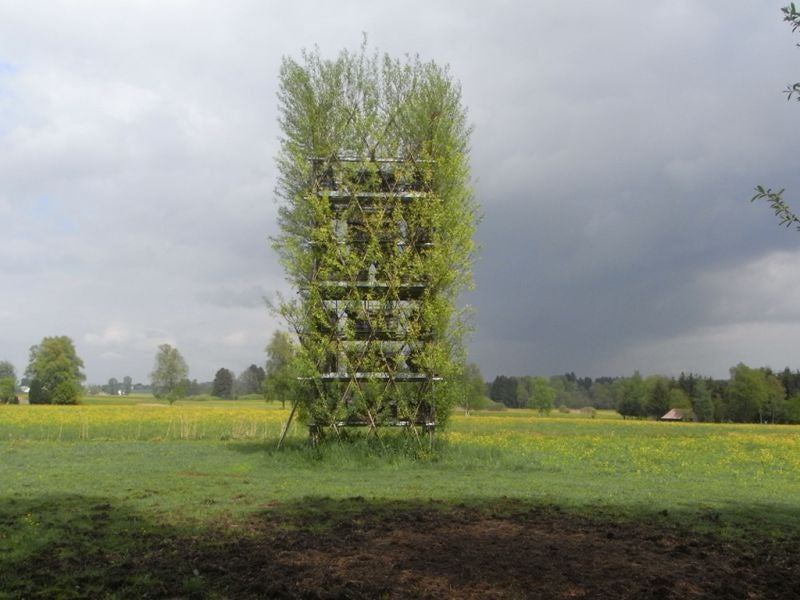 Plant Your Own House: Structures Made From Trees