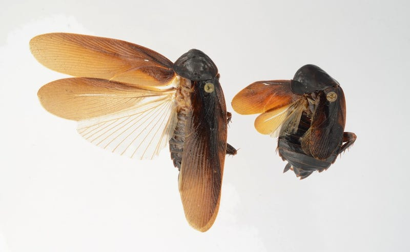 Winter-Proof Super Cockroaches Invade New York City