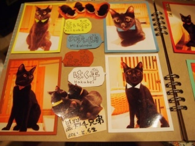 A Japanese Cat Cafe That Specializes in Black Cats