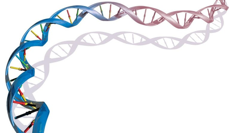 The experiment that showed how DNA replicates itself