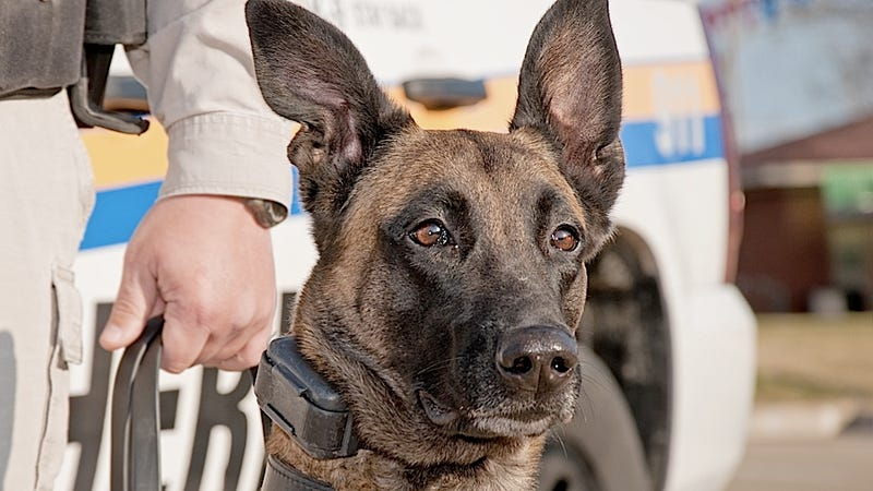 Enterprising Dog Becomes the Ranking Police Officer in a Small New Mexican Town