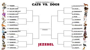 Cats vs. Dogs Tournament: Polls Open Now