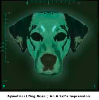 Dogs' brains — are they symmetrical?