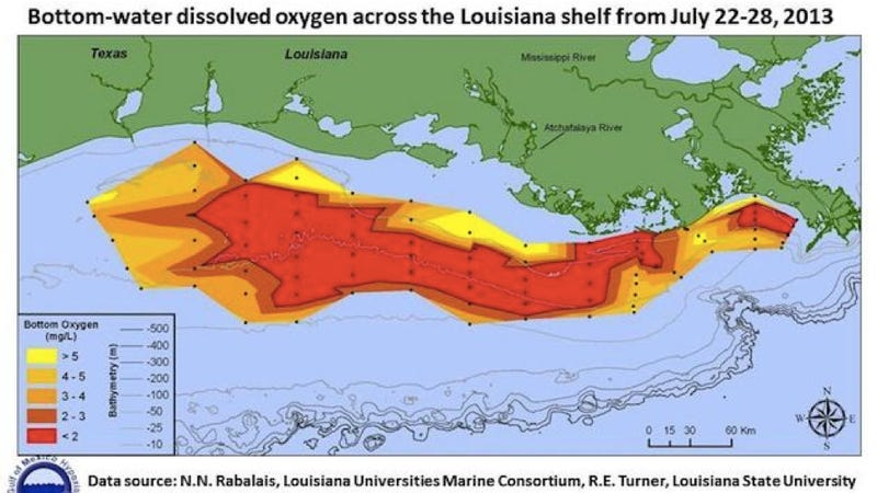 This is why the ocean is full of dead zones