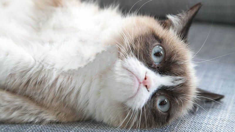 "The ""grumpy cat"" movie is a harbinger of the apocalypse"