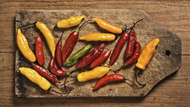 Why the hottest chilies grow in the wettest places