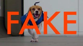 KLM's Sherlock dog is an adorable lie