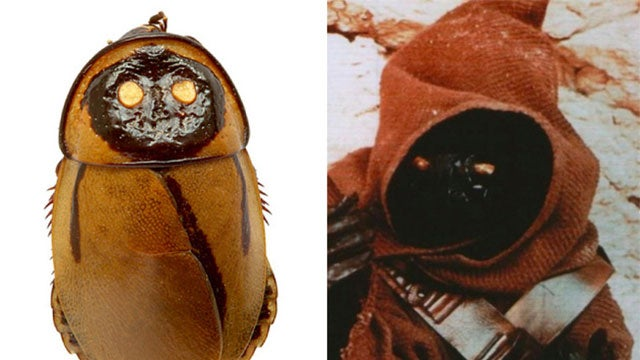 An Extinct Bug That Looks Just Like A Jawa