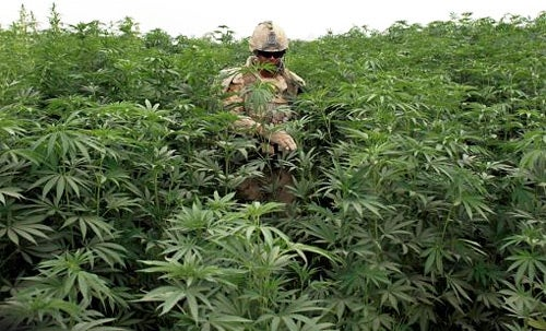 Government Prepares for Pot Growers' Bomb-Flinging Terrorist Attack