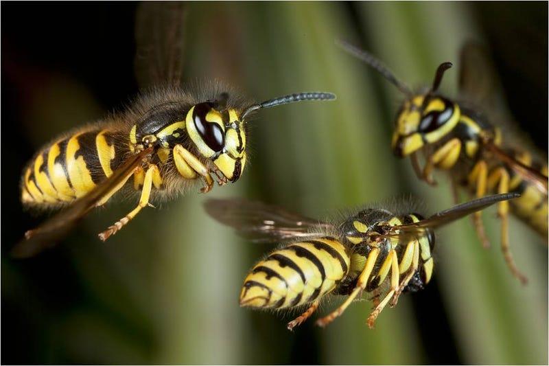 Cómo cazar espectaculares fotos de insectos en el aire