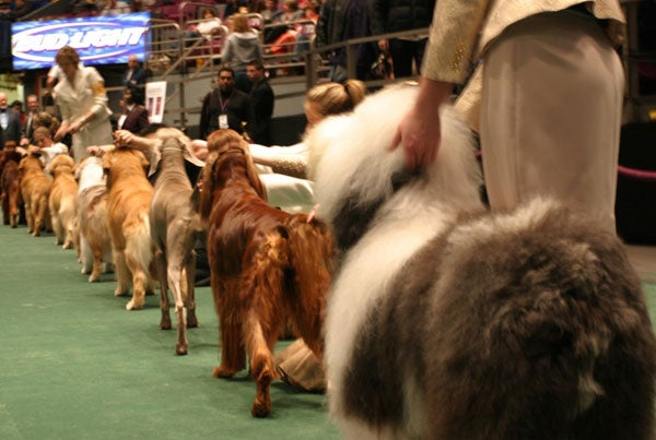 Wrapping Up The Westminster Dog Show