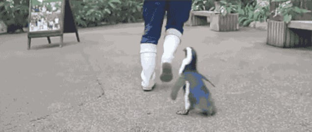 You Can Run But This Very Fast Baby Penguin Will Catch You