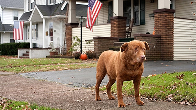 Aging In America: Dog Edition