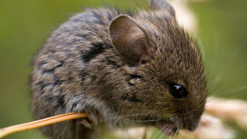10 Most Bizarre Animal Mating Behaviors