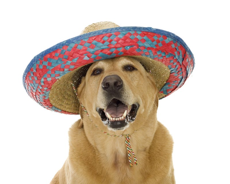 Comment of the Day: The True Meaning of Fiesta Day