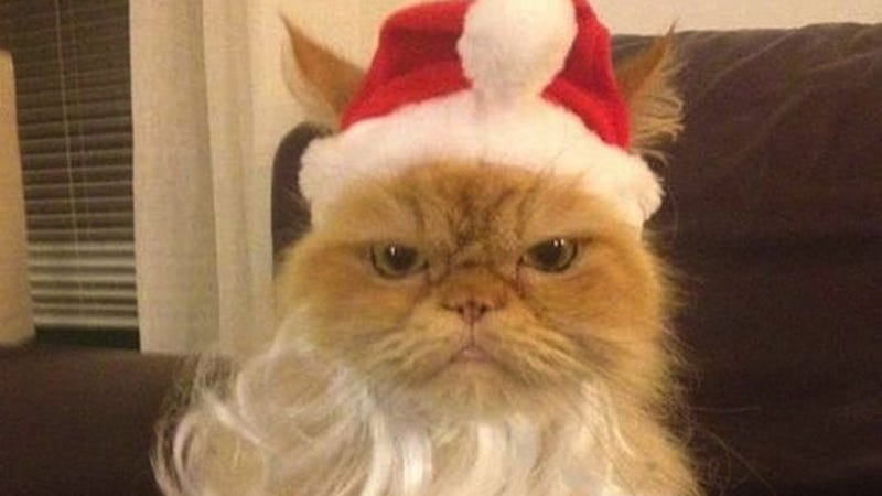 These Cats in Christmas Outfits Are Super Pissed, Will Seek Revenge