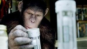 It's Ape Day!