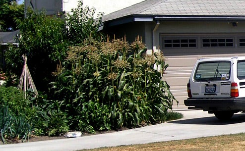 Save Money by Converting Your Lawn Into a Garden