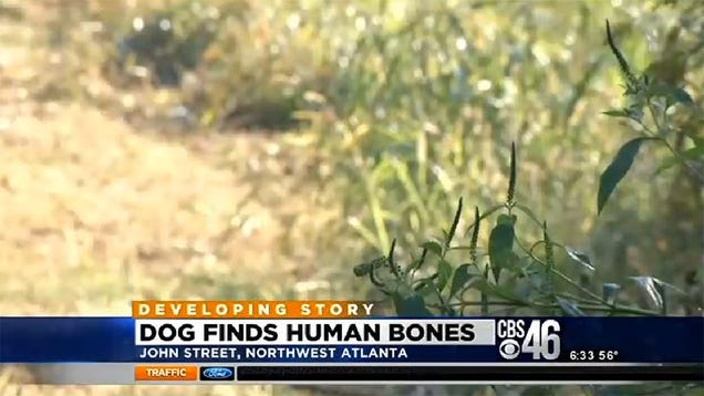 Dog Comes Home Chewing on a Human Bone