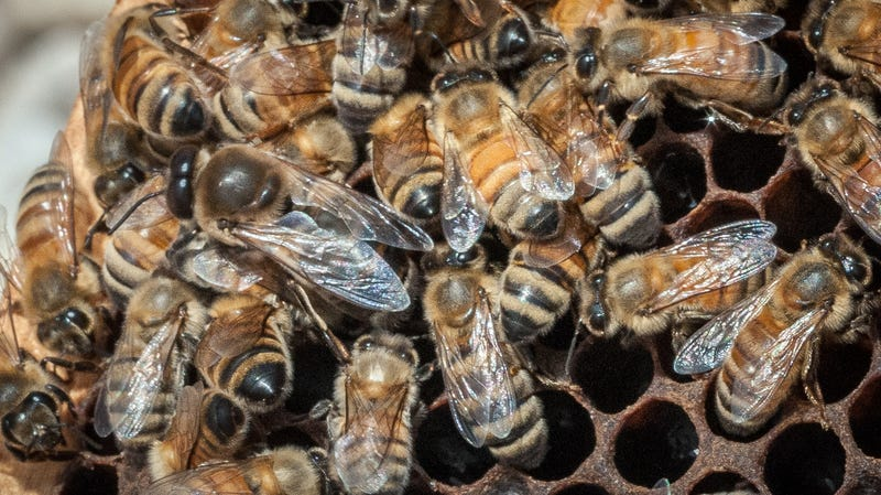 Michigan Man Crashes Into Empty House Filled With Bees, Dies