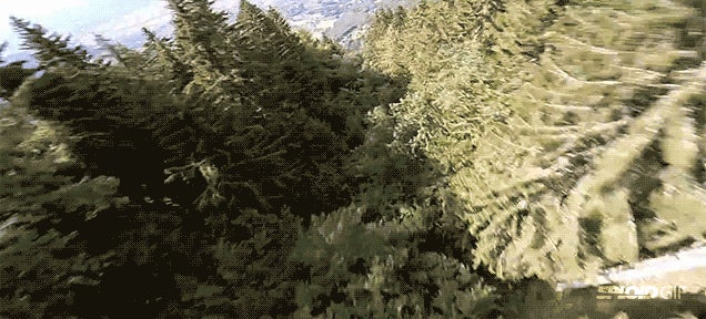 Wingsuit guy flies so close to trees he probably got twigs in his pants