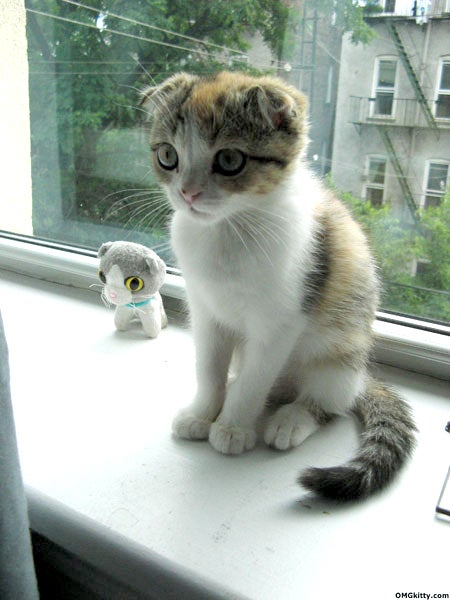Does This Kitten Look Like Lindsay Lohan?