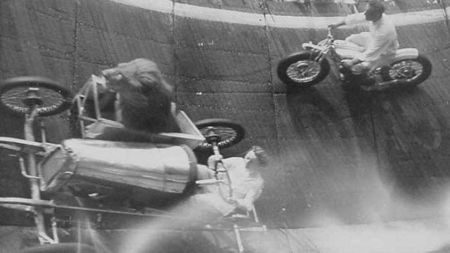 Why Yes, That Is a Lion Riding a Sidecar