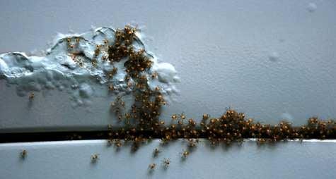 Spiders! Volkswagen Squareback Hosts Legfest