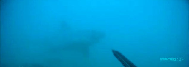 Diver fends off great white shark in frightening encounter