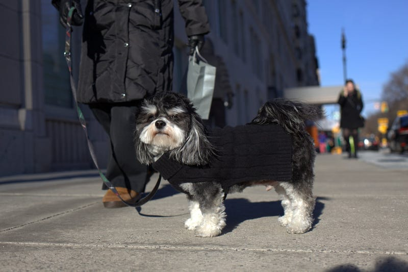 New York City's Dressed-Up Dogs of Winter