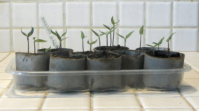 Spritz Seedlings with Water to Avoid Ruining Them
