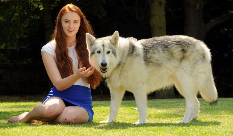 Sophie Turner Adopted Sansa Stark's Direwolf After It 'Died'