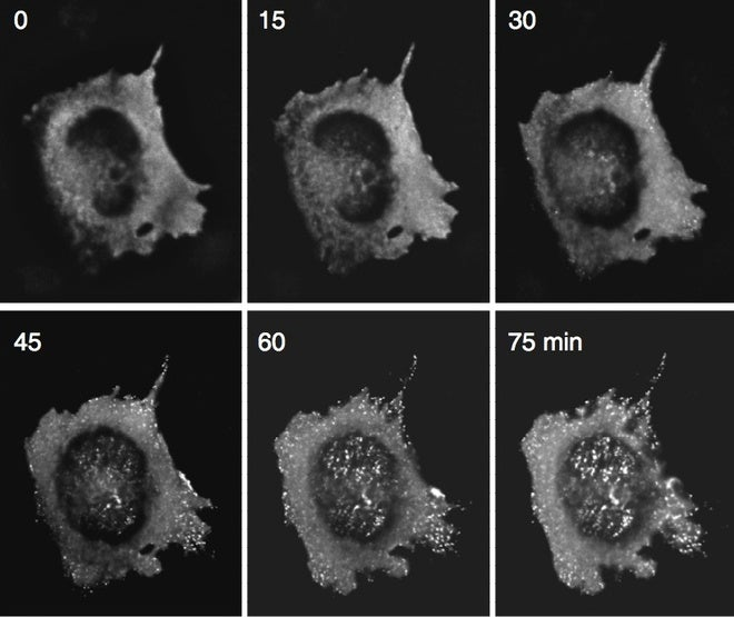 The Birth of a Virus, Photographed for First Time
