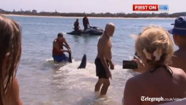 Grandpa Wrestles Shark with Bare Hands to Save Swimming Toddlers