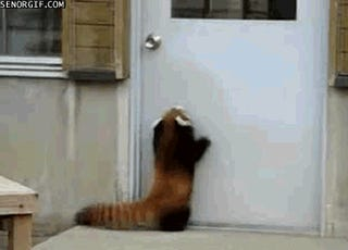 Animals sucking at jumping