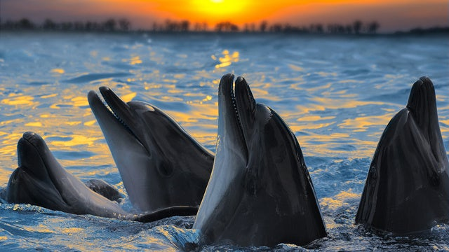 No, dolphins are not your 'therapists.' So just stop it.