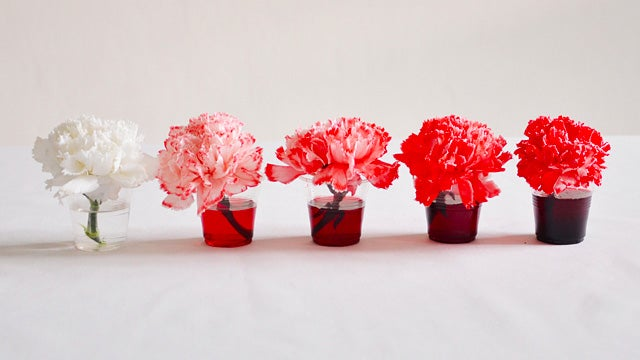 2,000 Tinted Carnations Make For Beautifully Tedious Art