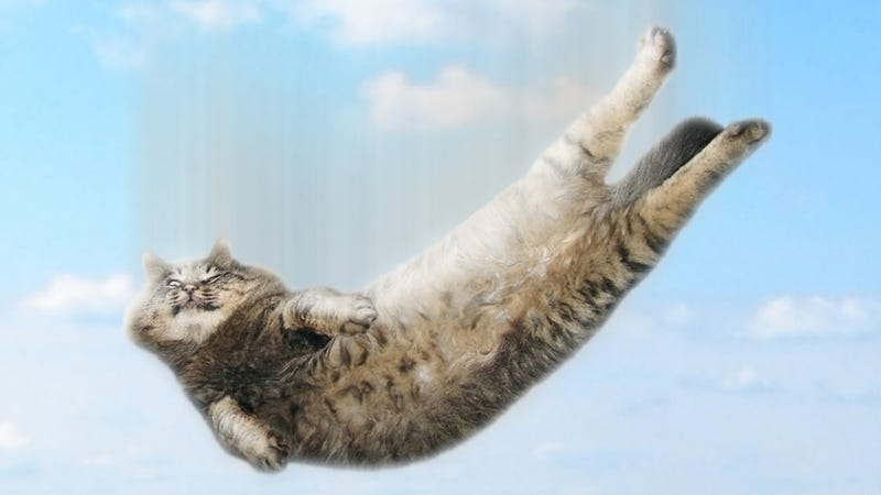 Why cats can survive falls that would kill any other animal