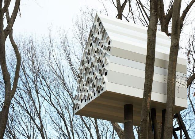 Las casas más fascinantes construidas sobre los árboles