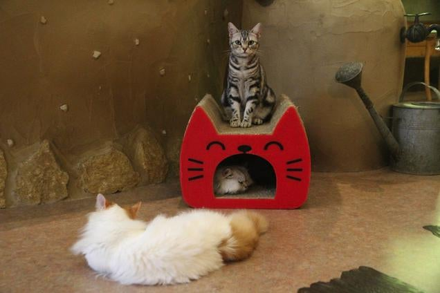 Cat Cafes Don't Get Much Cuter Than This
