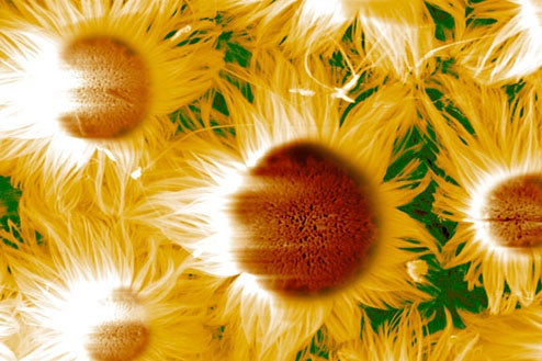 Nanomaterial Photos As Modern Art