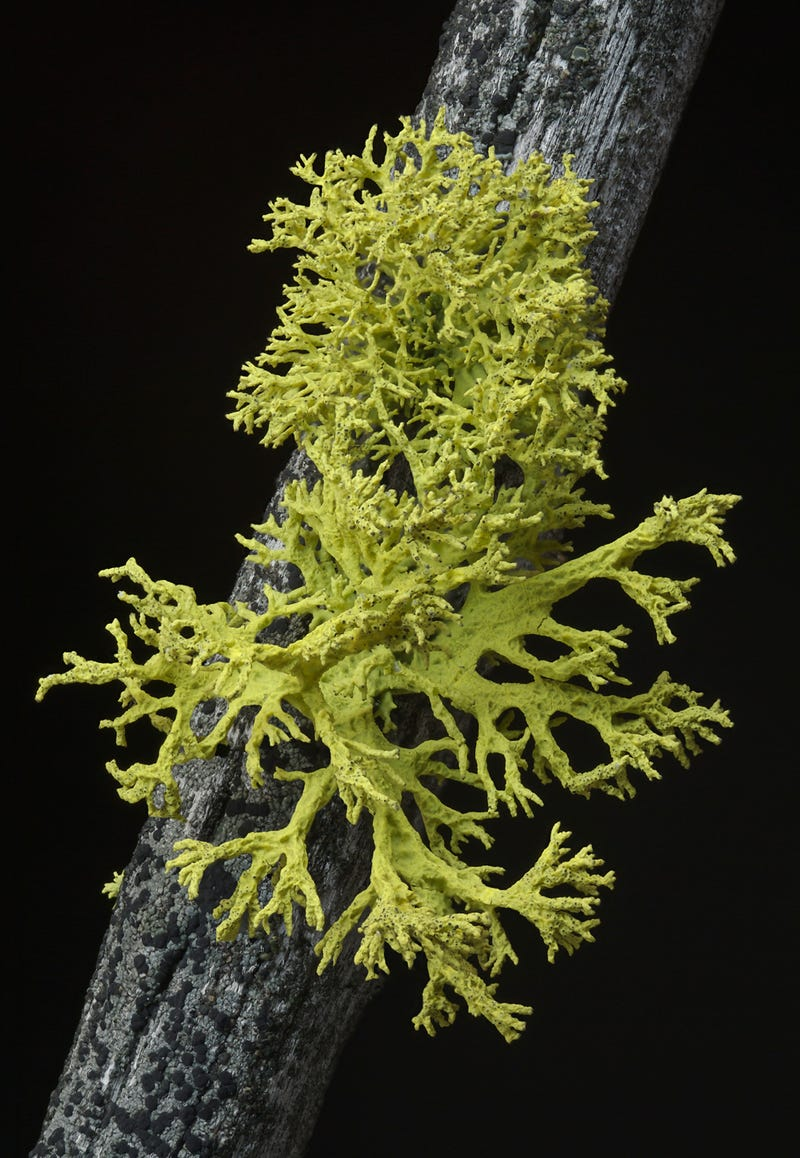 We've Been Wrong About Lichen For 150 Years