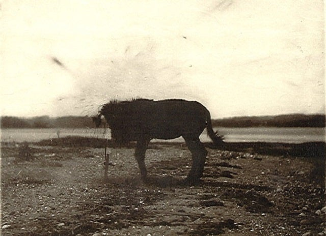 "In 1881, Engineers Blew Up A Mule For ""Science"""