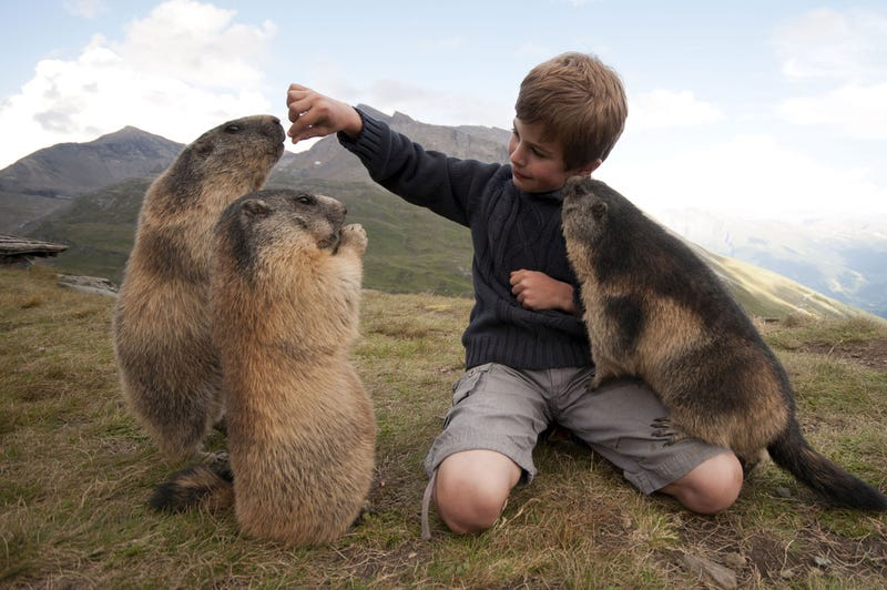 Science demands that you stop calling this kid the 'Marmot Whisperer'
