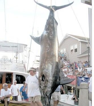 Fisherman Loses $900,000 Record Marlin Due To $5 Fishing License